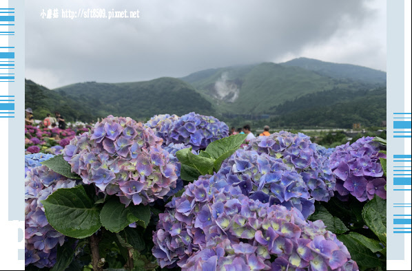 108.5.26.(221)竹子湖-大賞園繡球花田.JPG