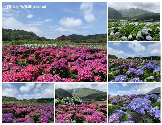 108.5.30.(250)竹子湖-花谷繡球花園.JPG