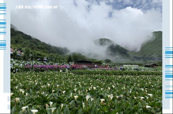 108.5.30.(248)竹子湖-花谷繡球花園.JPG