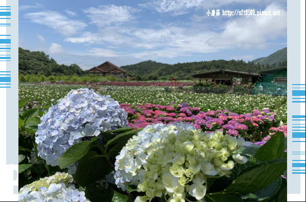 108.5.30.(245)竹子湖-花谷繡球花園.JPG