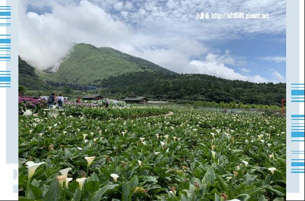 108.5.30.(247)竹子湖-花谷繡球花園.JPG
