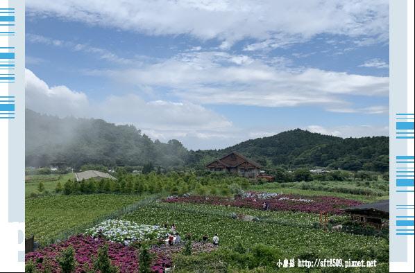 108.5.30.(249)竹子湖-花谷繡球花園.JPG