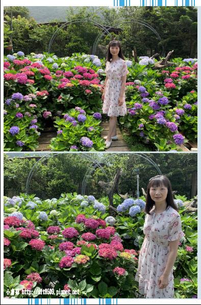 108.5.30.(9)竹子湖-花谷繡球花園.JPG