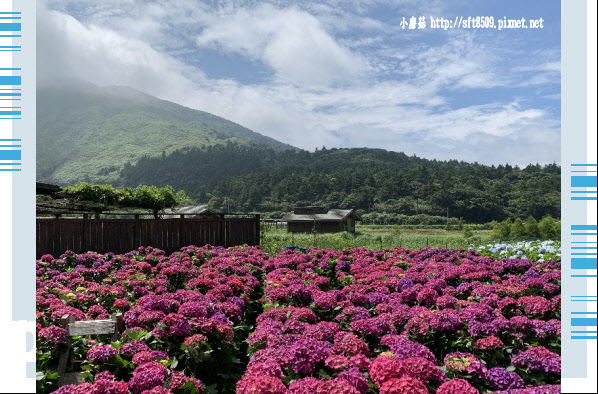 108.5.30.(19)竹子湖-花谷繡球花園.JPG