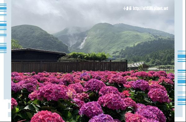 108.5.30.(22)竹子湖-花谷繡球花園.JPG