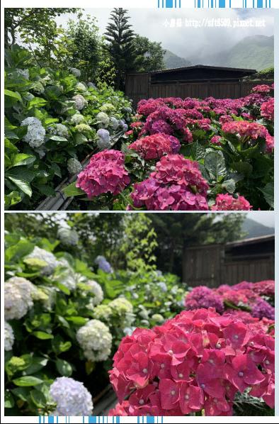 108.5.30.(25)竹子湖-花谷繡球花園.JPG