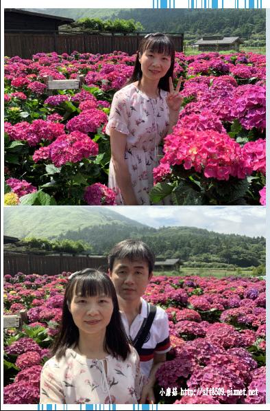 108.5.30.(39)竹子湖-花谷繡球花園.JPG