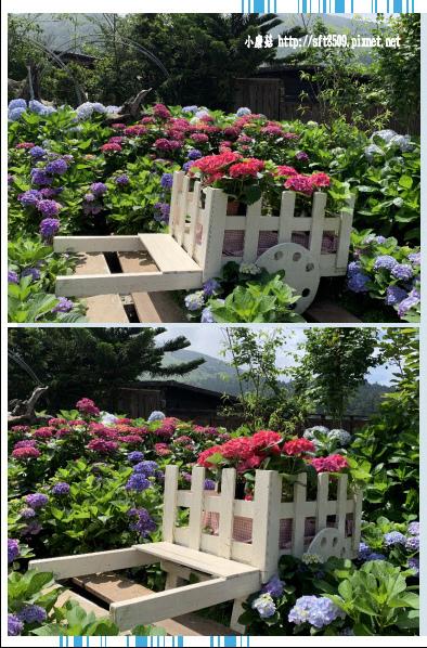 108.5.30.(15)竹子湖-花谷繡球花園.JPG