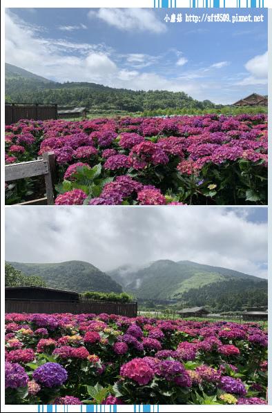 108.5.30.(33)竹子湖-花谷繡球花園.JPG