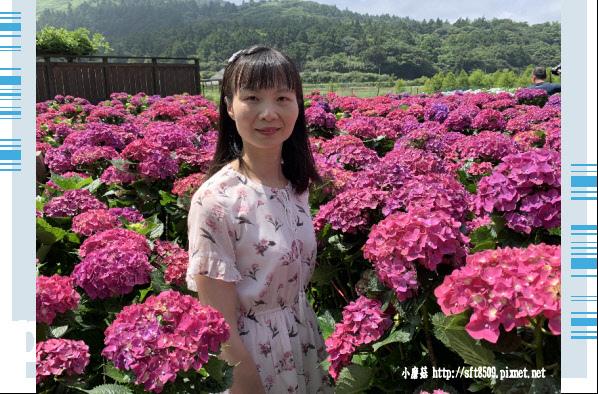 108.5.30.(44)竹子湖-花谷繡球花園.JPG