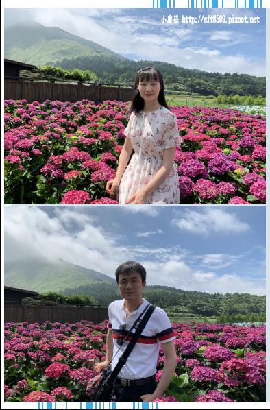 108.5.30.(36)竹子湖-花谷繡球花園.JPG