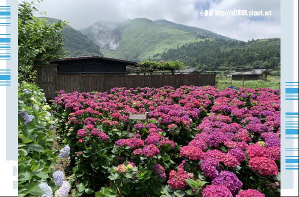108.5.30.(24)竹子湖-花谷繡球花園.JPG