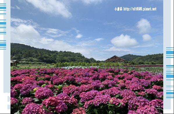 108.5.30.(45)竹子湖-花谷繡球花園.JPG
