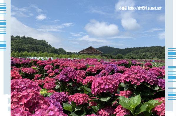 108.5.30.(48)竹子湖-花谷繡球花園.JPG