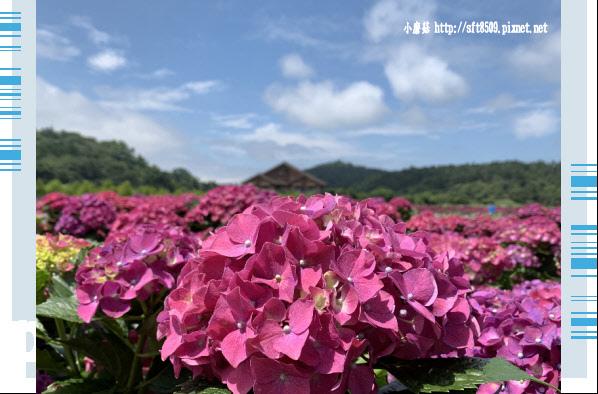 108.5.30.(50)竹子湖-花谷繡球花園.JPG