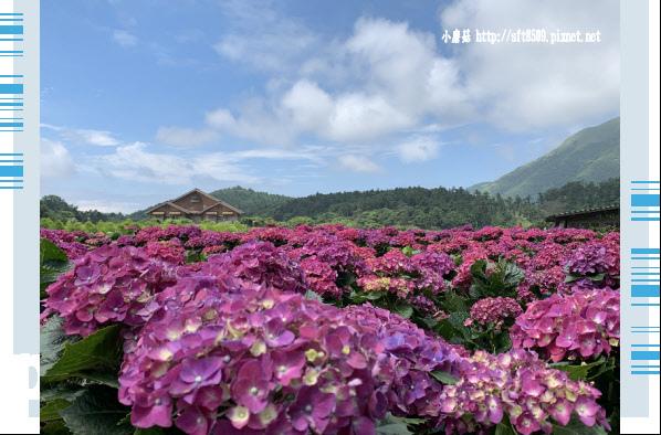 108.5.30.(59)竹子湖-花谷繡球花園.JPG