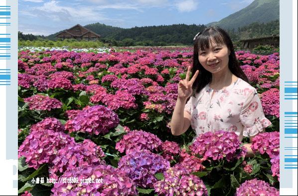108.5.30.(56)竹子湖-花谷繡球花園.JPG