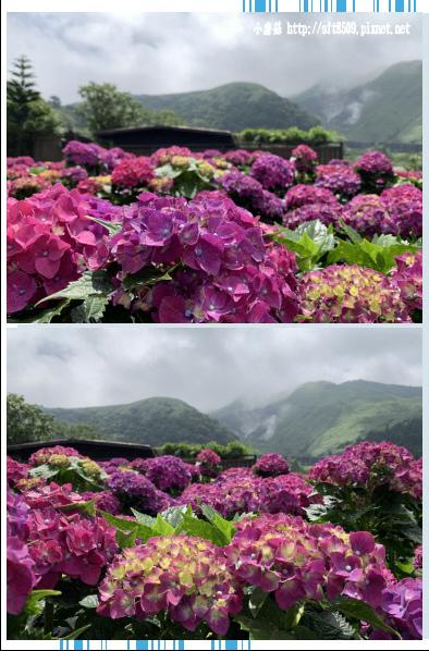 108.5.30.(80)竹子湖-花谷繡球花園.JPG