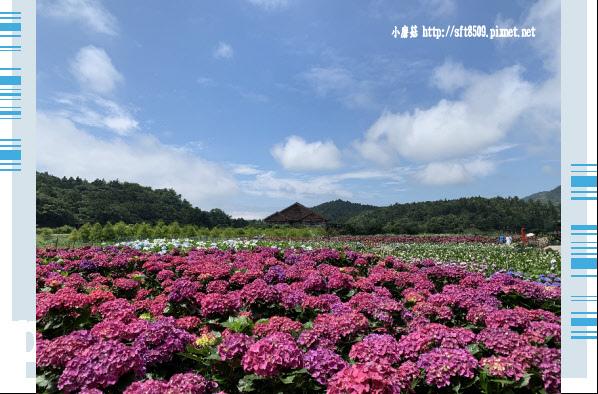 108.5.30.(66)竹子湖-花谷繡球花園.JPG