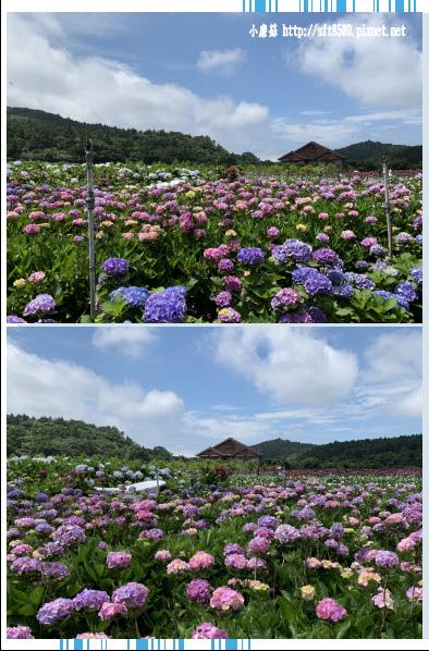 108.5.30.(91)竹子湖-花谷繡球花園.JPG