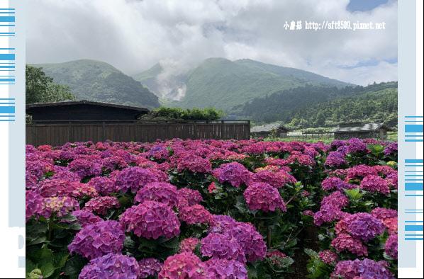 108.5.30.(67)竹子湖-花谷繡球花園.JPG