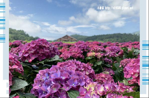 108.5.30.(60)竹子湖-花谷繡球花園.JPG