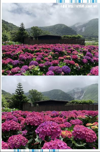 108.5.30.(76)竹子湖-花谷繡球花園.JPG