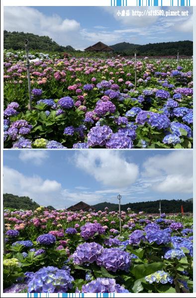 108.5.30.(89)竹子湖-花谷繡球花園.JPG