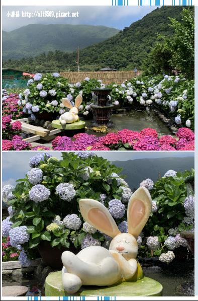 108.5.30.(86)竹子湖-花谷繡球花園.JPG