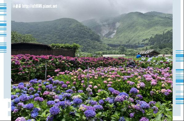 108.5.30.(121)竹子湖-花谷繡球花園.JPG