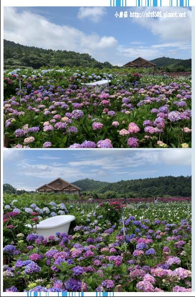 108.5.30.(94)竹子湖-花谷繡球花園.JPG