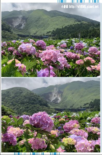 108.5.30.(123)竹子湖-花谷繡球花園.JPG
