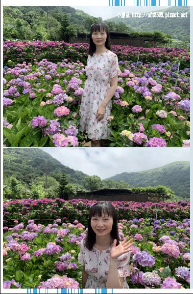 108.5.30.(102)竹子湖-花谷繡球花園.JPG