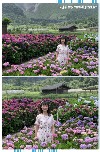 108.5.30.(112)竹子湖-花谷繡球花園.JPG