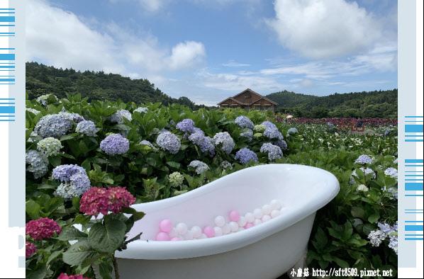 108.5.30.(127)竹子湖-花谷繡球花園.JPG
