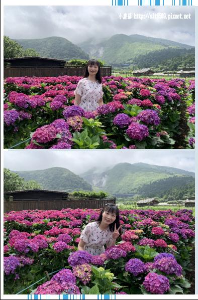 108.5.30.(68)竹子湖-花谷繡球花園.JPG