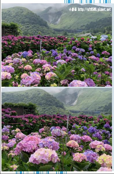 108.5.30.(116)竹子湖-花谷繡球花園.JPG