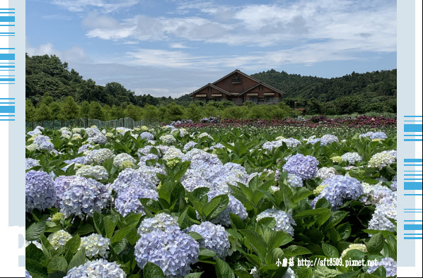 108.5.30.(140)竹子湖-花谷繡球花園.JPG