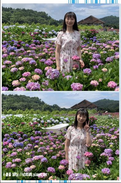 108.5.30.(97)竹子湖-花谷繡球花園.JPG