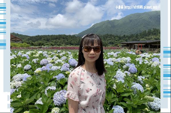 108.5.30.(143)竹子湖-花谷繡球花園.JPG