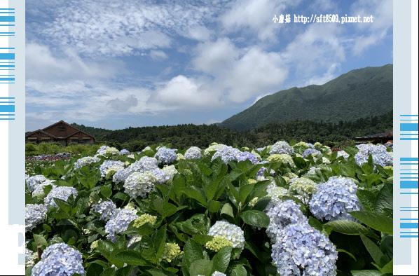 108.5.30.(145)竹子湖-花谷繡球花園.JPG