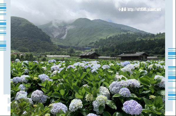 108.5.30.(134)竹子湖-花谷繡球花園.JPG