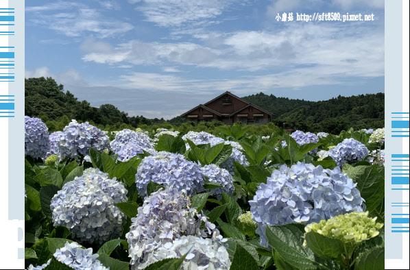 108.5.30.(138)竹子湖-花谷繡球花園.JPG