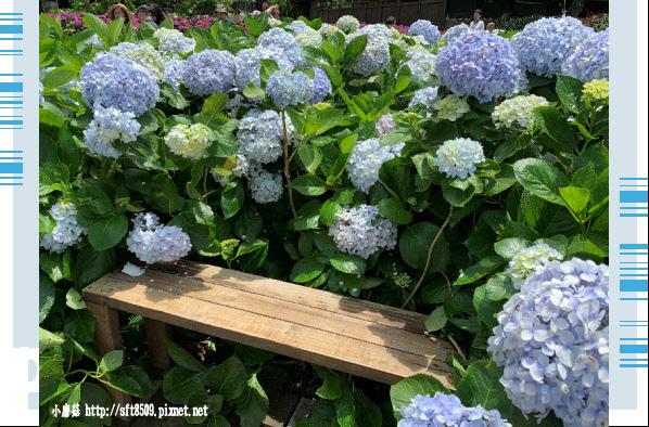108.5.30.(148)竹子湖-花谷繡球花園.JPG