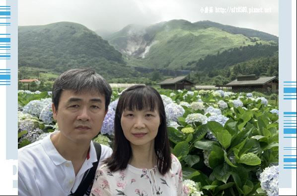 108.5.30.(152)竹子湖-花谷繡球花園.JPG