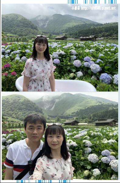 108.5.30.(130)竹子湖-花谷繡球花園.JPG