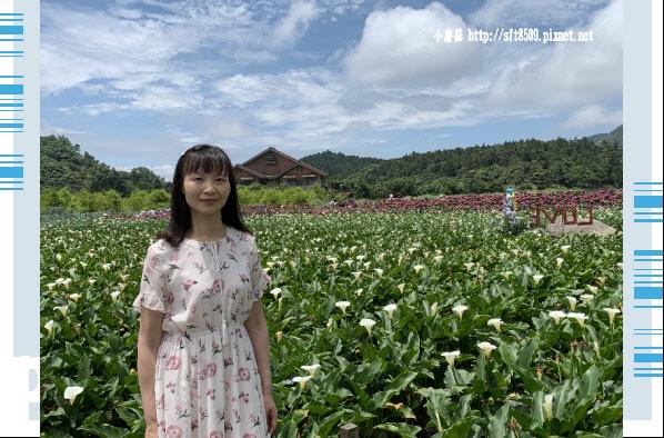 108.5.30.(154)竹子湖-花谷繡球花園.JPG