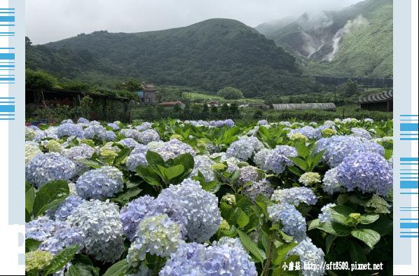 108.5.30.(156)竹子湖-花谷繡球花園.JPG