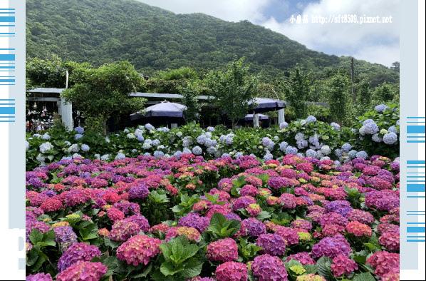 108.5.30.(176)竹子湖-花谷繡球花園.JPG