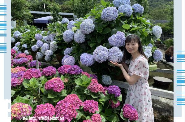 108.5.30.(165)竹子湖-花谷繡球花園.JPG